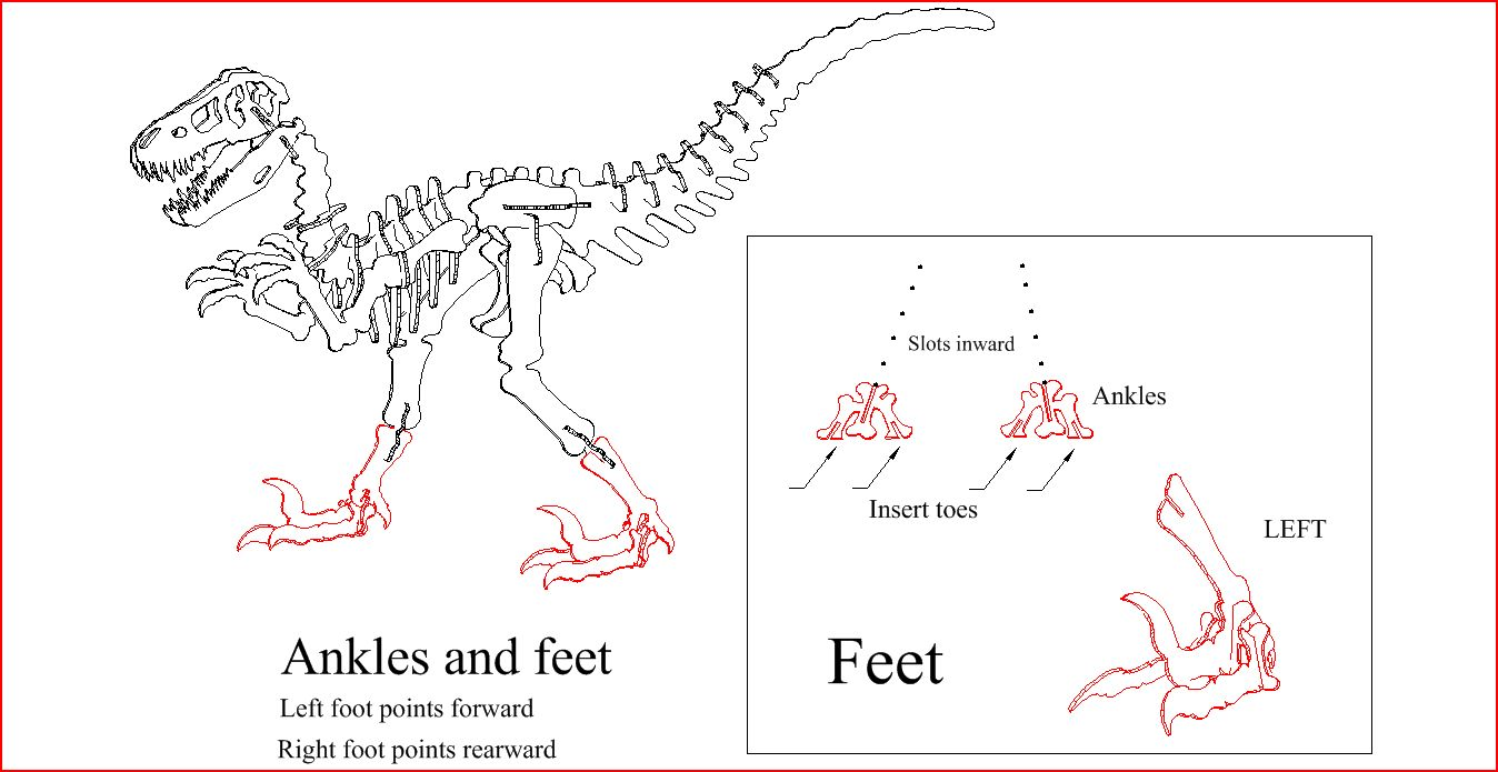Chicken Dinosaur Feet Diagram Download Wiring Diagrams